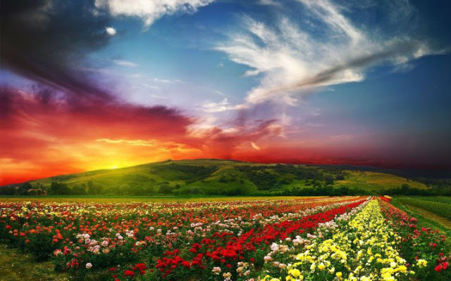rose-farm.jpg